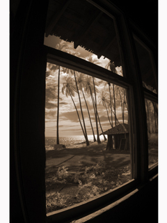 Palm Grove Through Old Window by Joan  Cooke