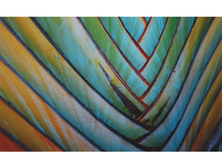 Rainbow Palm by Joan Dubanoski