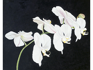 White Orchids by Dieter Runge